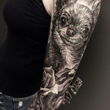 chiwawa,dog, portrait, realismus, electrogr aphic tattoo,germany, bayern, rosenheim, münchen , salzburg , innsbruck, vogel, rose, tattoo, tattoo art, color, realistic 2